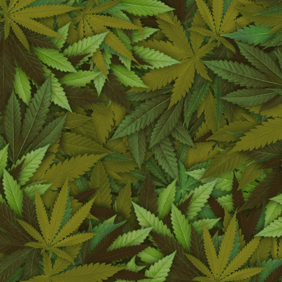 Cannabis pattern close-up